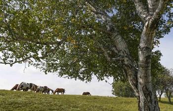 In pics: Wulan Butong Grassland in north China's Inner Mongolia
