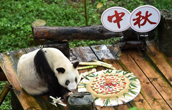 Giant panda tastes specially-made mooncake at Chongqing Zoo