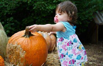 In pics: Spooky Pumpkin Garden in New York