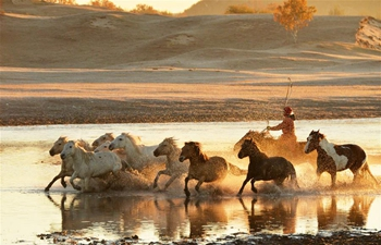 Horses run on Ulanbutong Grassland in N China's Inner Mongolia