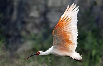 Various wild birds seen across China