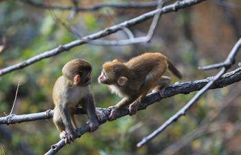 Monkeys play at Huaguo Mountain Scenic Area in Lianyungang, E China