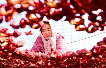 Hawthorn industry increases farmers' incomes in E China's Shandong