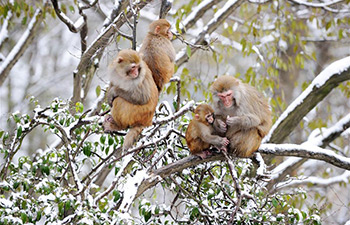 In pics: monkeys in snow
