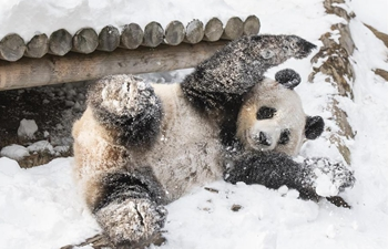 Panda World of Everland in south of Seoul opens to public for 1,000 days
