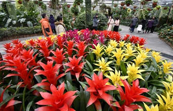 People visit Beijing Garden of World's Flowers on last day of Spring Festival holiday