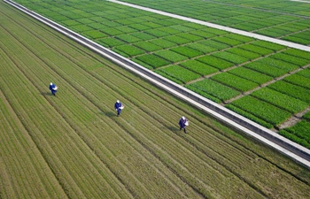 Farmers busy with farm work in early spring across China