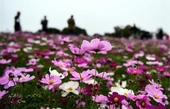 Gesang flowers enter blooming season in China's Guangxi