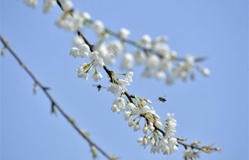 "Nature full of vigor, vitality on day of ""Jingzhe"""