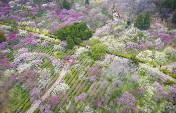 Tourists enjoy scenery of flowers in blossom in China's Jiangsu Province
