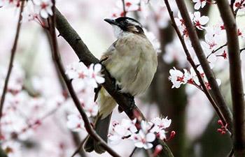 Birds, flowers seen in spring