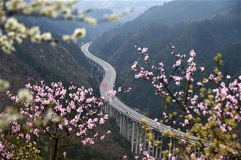In pics: blooming flowers along Sijian expressway in SW China's Guizhou