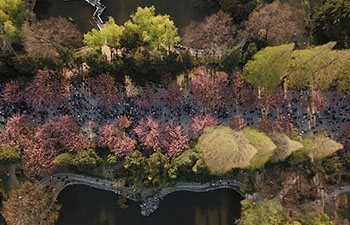 Visitors enjoy cherry blossoms in E China's Anhui