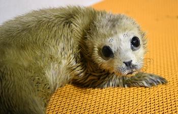 New-born seal pup makes debut at Harbin Polarland