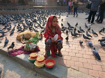 Nepalese girl sells grains for feeding pigeons in Kathmandu