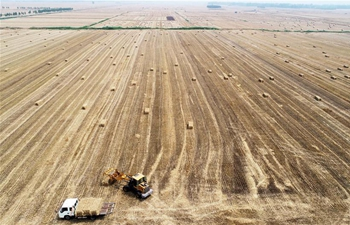 Farmers work during summer across China