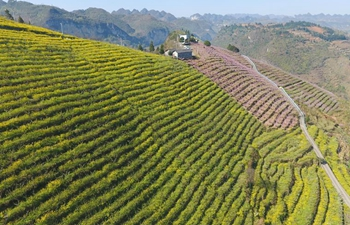 Local farmers make full use of land to develope agriculture in Guizhou