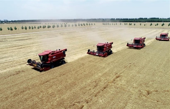 China's agriculture sector sees rapid growth over past 70 years