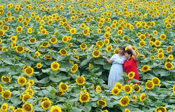 Sunflowers draw visitors to planting base in Shahe, N China