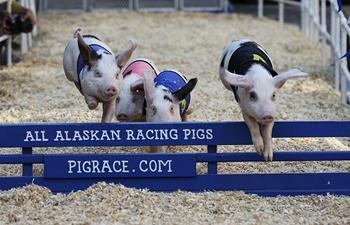 In pics: piggy hurdle racing at Original Farmers Market Fall Festival