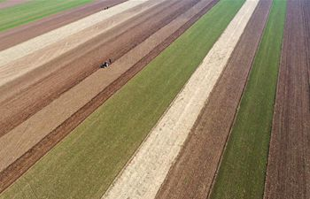Farmer plant wheat in C China's Henan