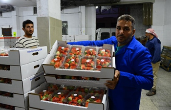 Israel allows export of limited strawberry shipments from Gaza Strip to European markets
