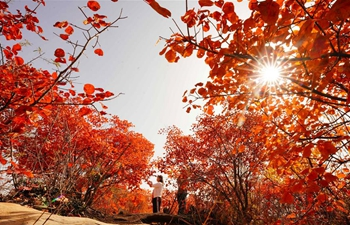 Scenery of red leaves in Hongfeng Mountain of Chaiguan Township, N China