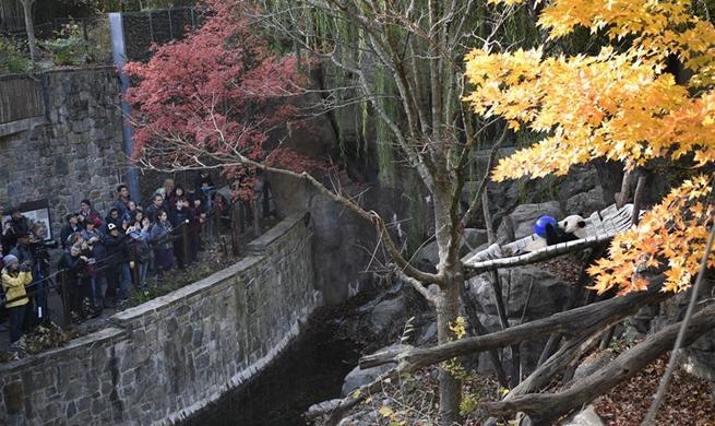 Spotlight: U.S. national zoo begins weeklong goodbye to giant panda Bei Bei