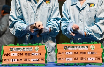 Giant panda cubs take physical examination in Guangzhou