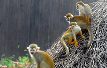 Squirrel monkeys seen in Suzhou, E China's Jiangsu