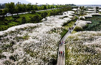 Aerial view of wetland park in China's Shaanxi