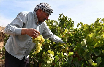 Feature: Traditional grape molasses remains popular in southern Syria