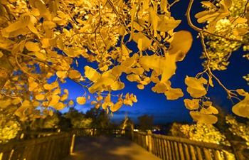 Xinjiang's beauty in autumn