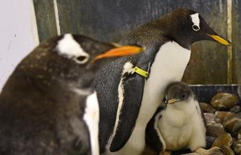 Harbin Polarland has new batch of penguins hatch