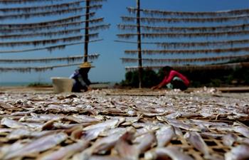 Fish farmers dry fish in Myanmar