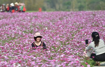 Tourists view blooming coreopsis at scenic spot in Nanning, S China