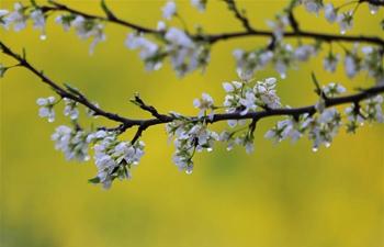 In pics: flowers in rain