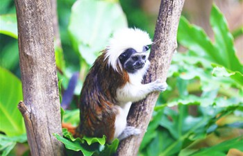 Animals seen in Australia's second oldest zoo