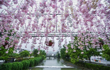 Flower-themed exhibition held at Longmen ancient town in China's Zhejiang