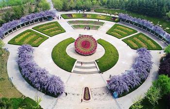 Scenery of wistaria in Jiaozhou City, E China's Shandong