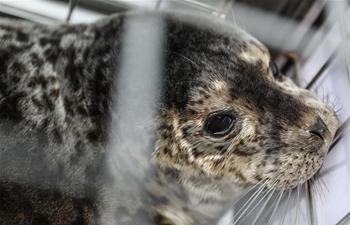 Rare seals released to sea in NE China