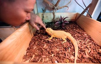 Pic story of exotic pet lover in Myanmar