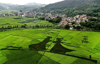 Rice paddy art picture shown at Luohong Village in China's Guangdong