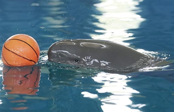 1-year-old finless porpoise celebrates birthday in Wuhan, China's Hubei