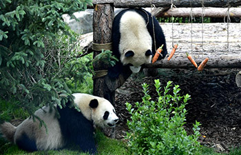 Panda house opens to public in Xining, China's Qinghai