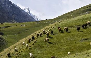 Scenery of Laybulak pasture in NW China's Xinjiang