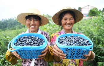 Cizhu town in SW China develops alpine blueberry industry to improve people's income