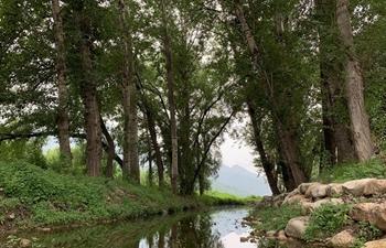Summer scenery at Maoshan village in Huairou District of Beijing