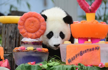 18 panda cubs have birthday party in Sichuan