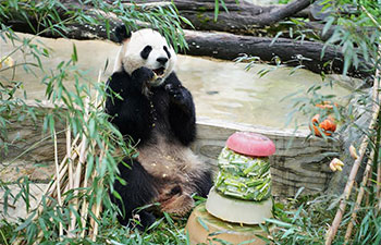 Giant panda Mao Zhu celebrates 5-year birthday